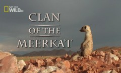 Clan_of_the_Meerkat_Wallpaper